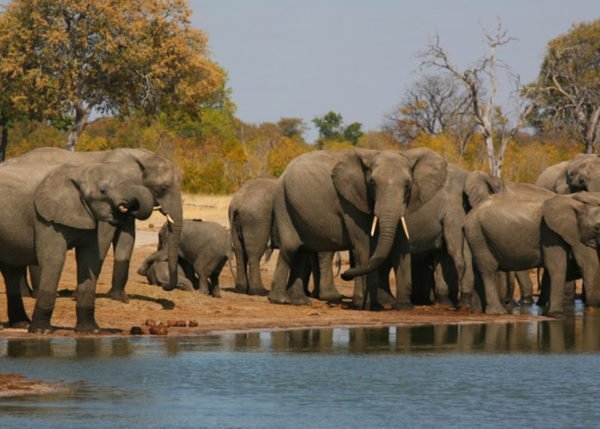 Hwange: Land of Elephants and Home to the Presidential Herd 1