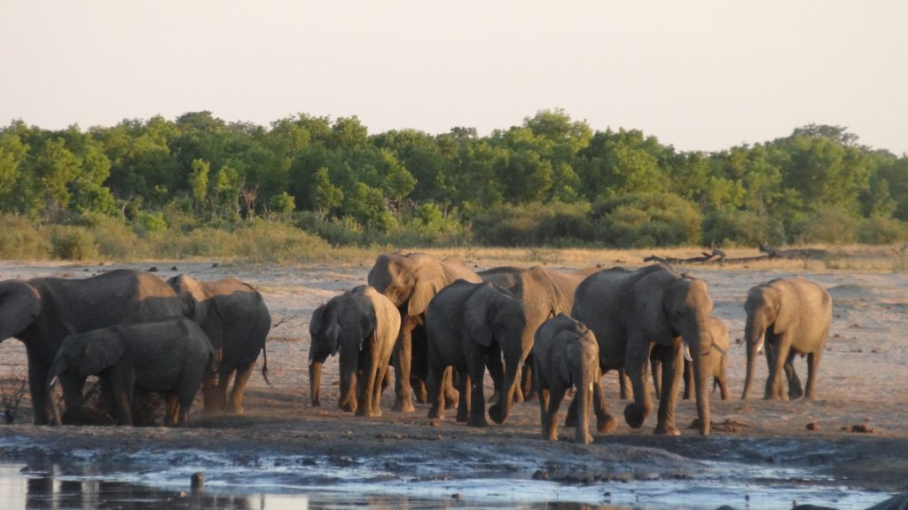 Hwange: Land of Elephants and Home to the Presidential Herd