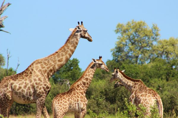 10 Things to Do in Hwange 3