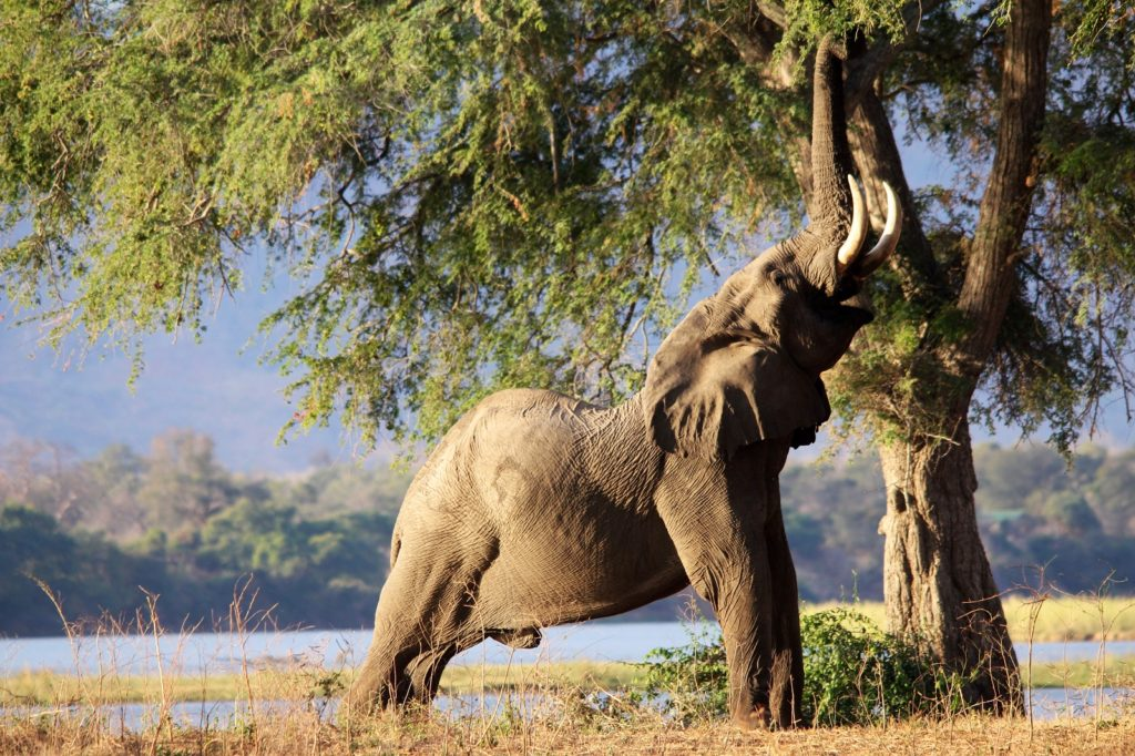 5 attractions to combine with Hwange 1
