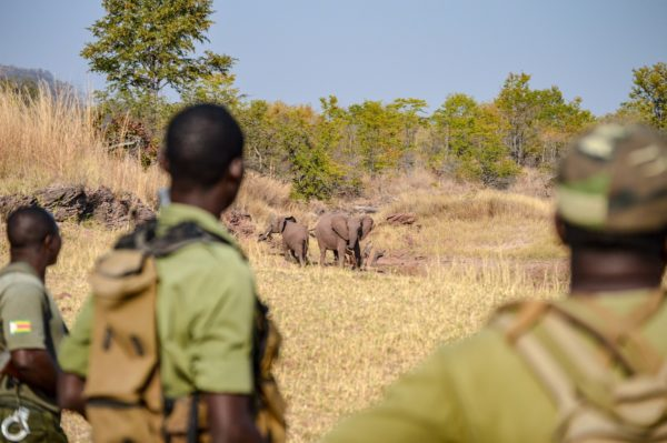 Can Your Safari Holiday Help Africa and its Inhabitants? 2