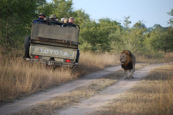 Can Your Safari Holiday Help Africa and its Inhabitants? 1