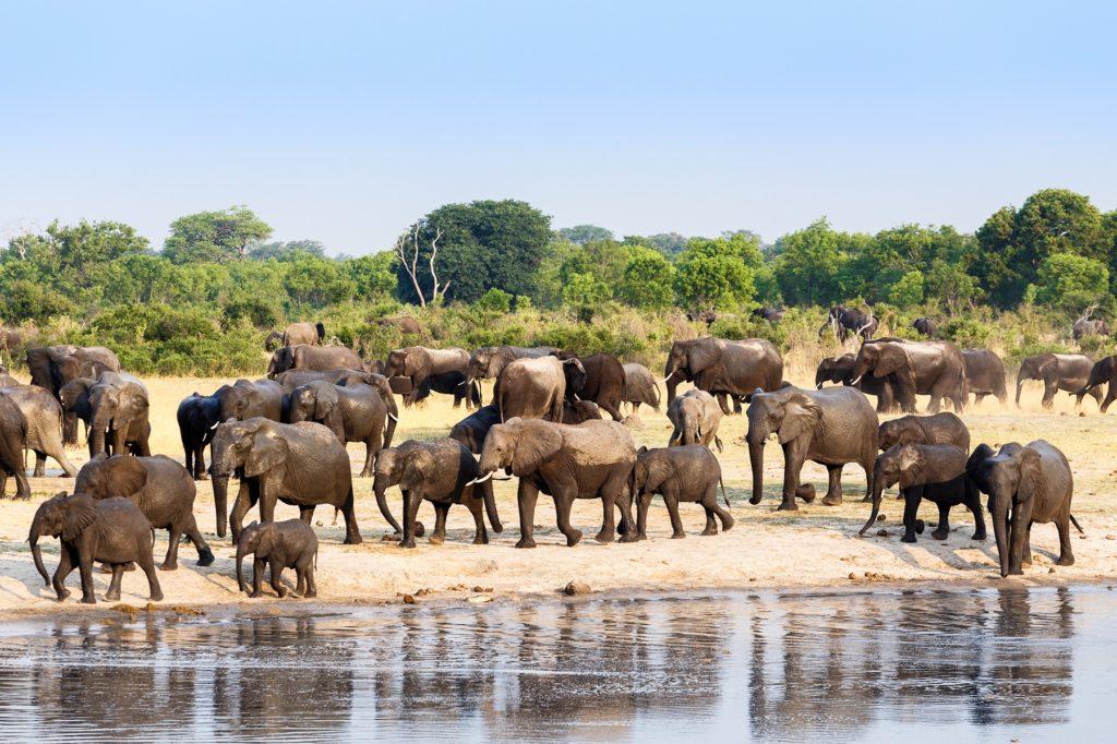 Hwange – Home of Africa's Last Super Herds