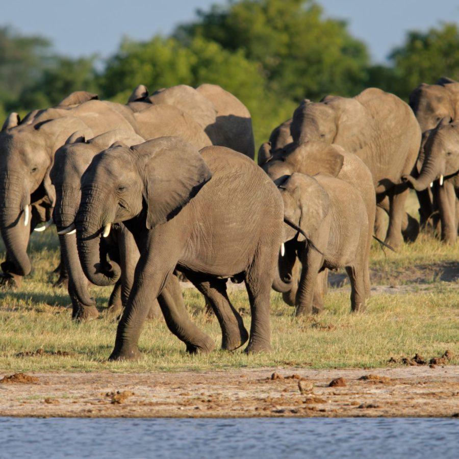 Herd of African elephants | Bedouin Bush Camp Package