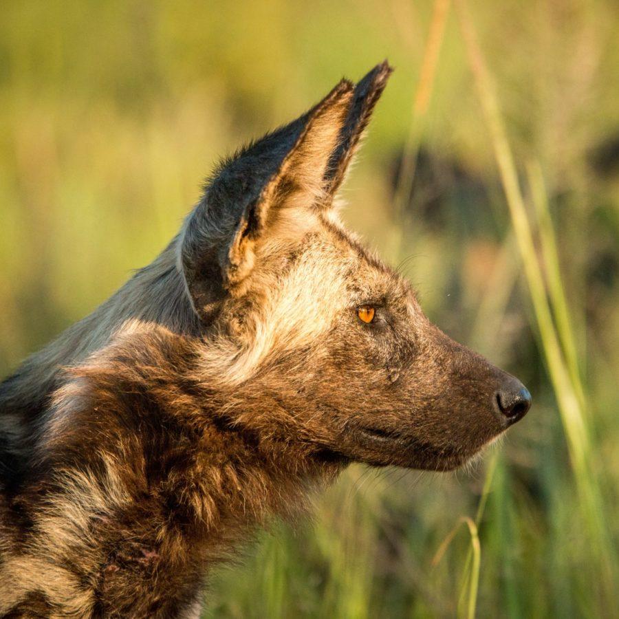Rhino Track & Trail