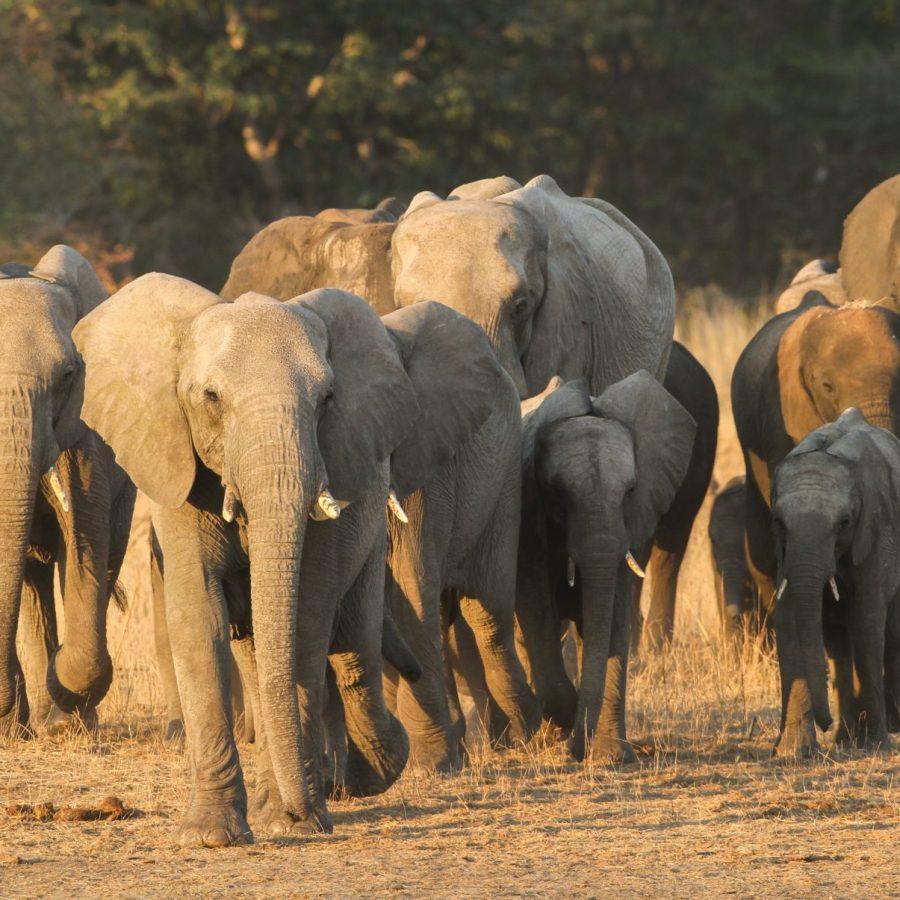 Elephants | Victoria Falls & Hwange Wildlife Experience