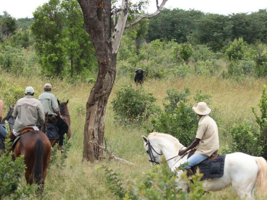 Horse riding safari special | Elephant's Eye, Hwange