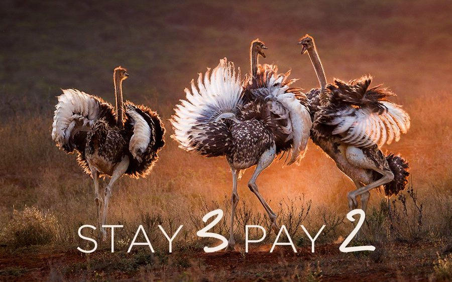Stay 3 Pay 2 - Elephant's Eye, Hwange