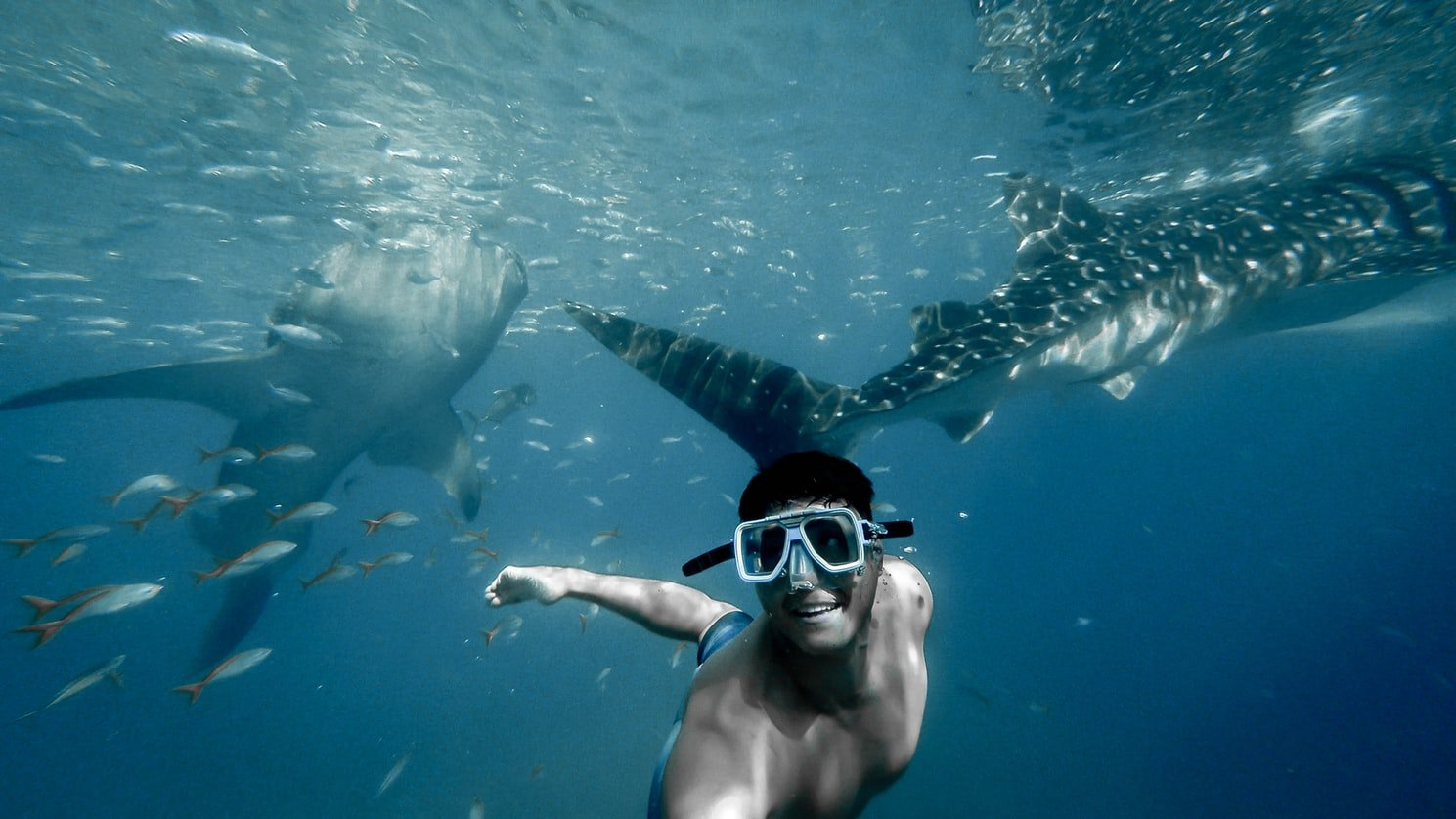 Swim with whale sharks in Mozambique