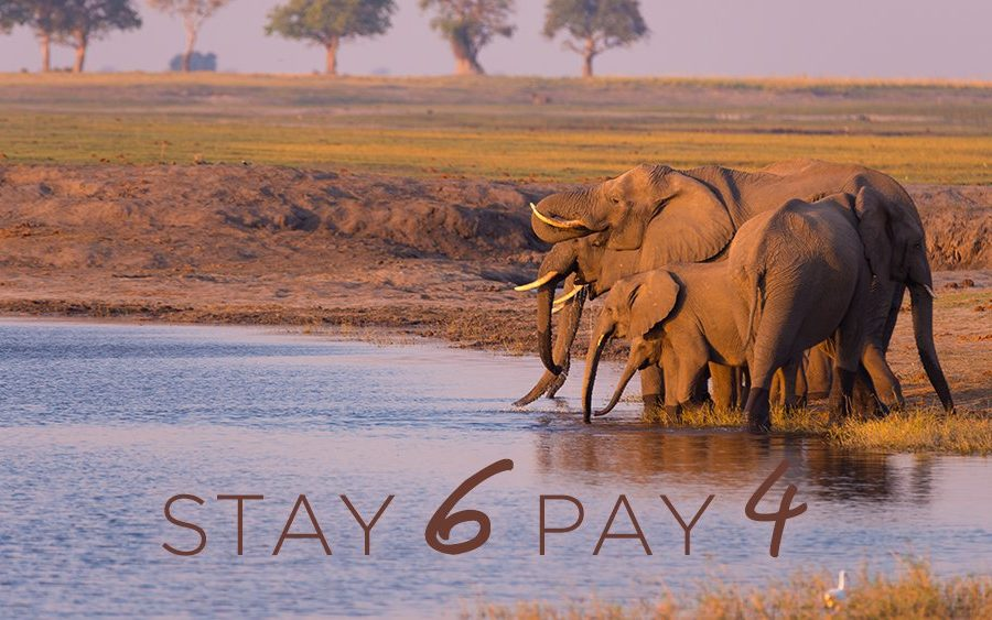 Stay 6 Pay 4 - Elephant's Eye and Nantwich, Hwange