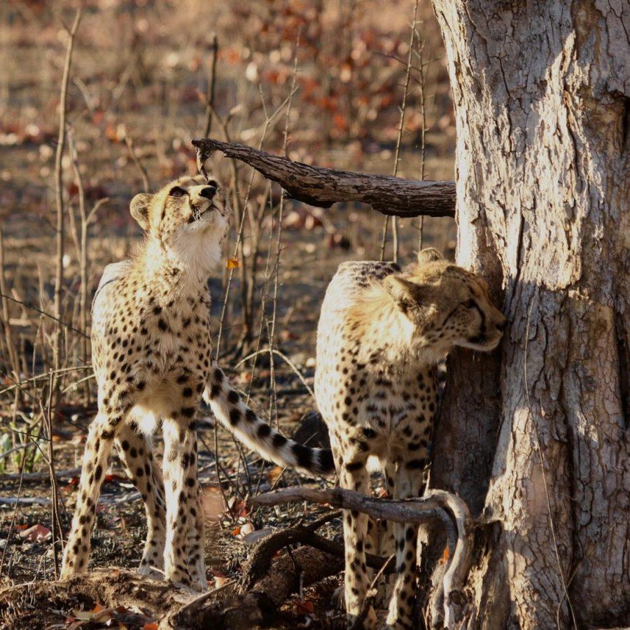 Chobe & Hwange - Hwange National Park
