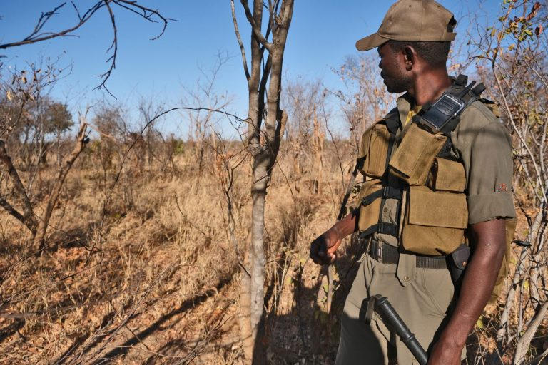 Anti-Poaching Unit Scout