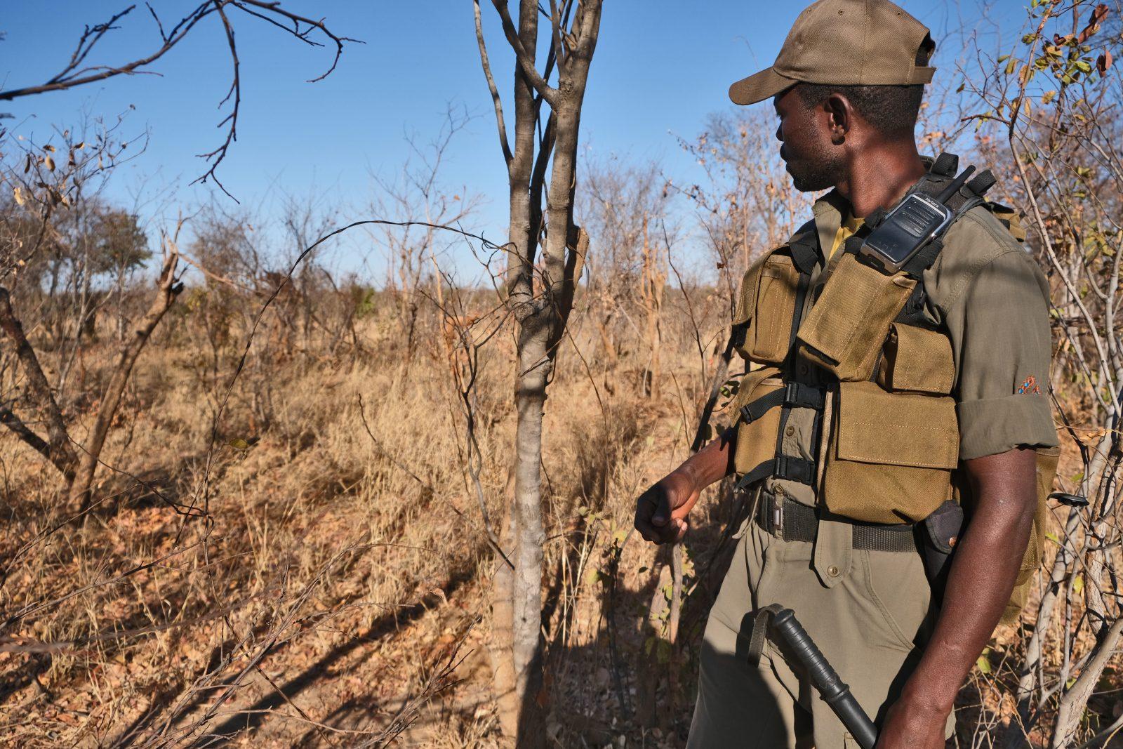 Anti-Poaching Unit Scout