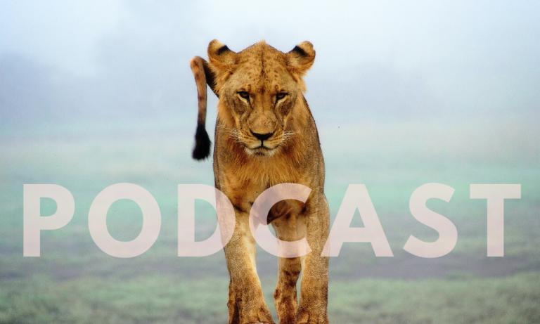 CWF Podcast