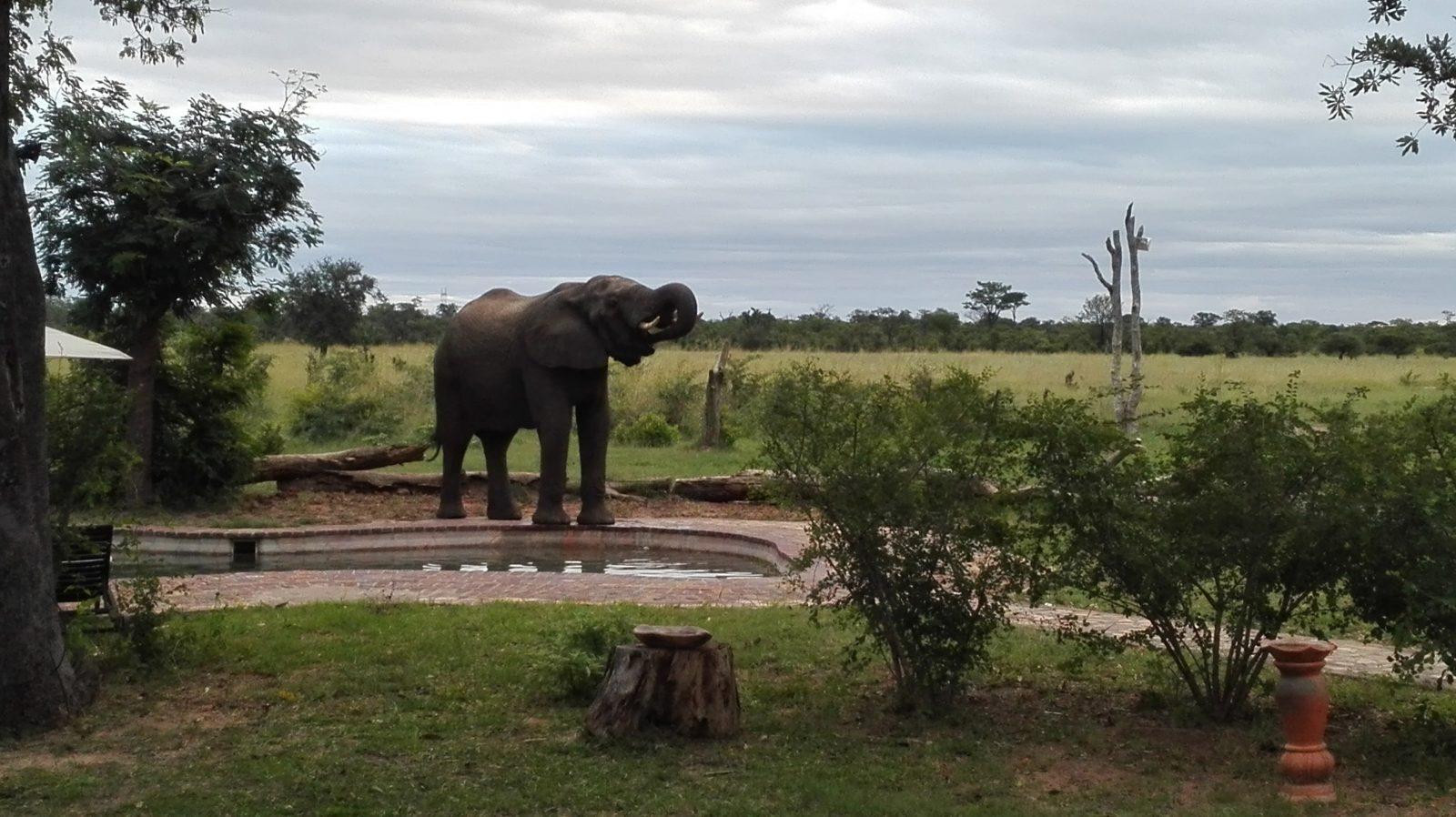 Elephant's Eye Hwange Zimbabwe