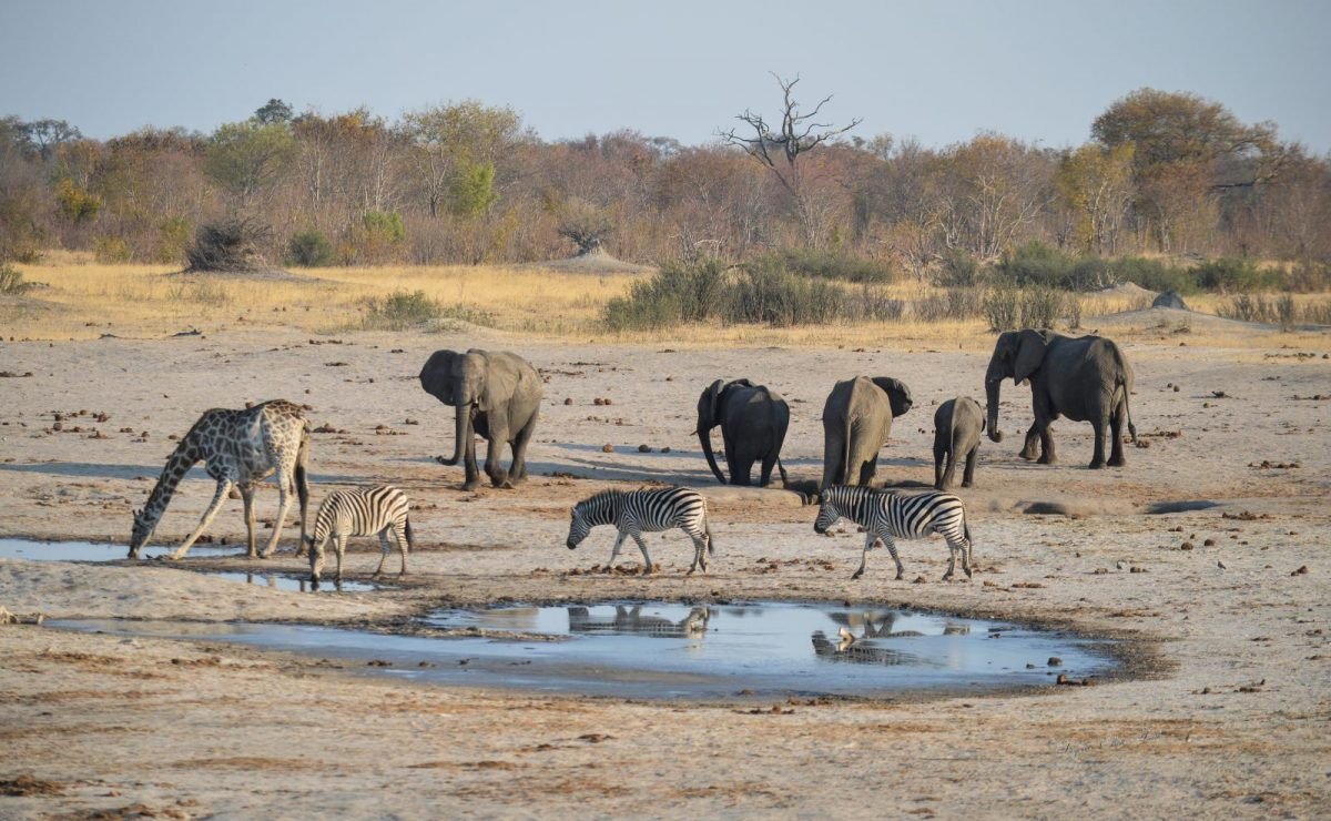 Hwange Game Count