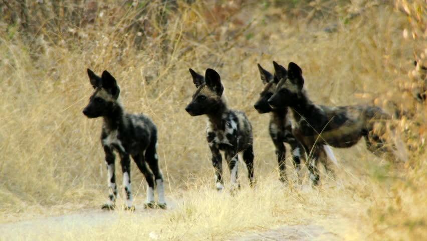 Hwange National Park: A Community of Survival 5
