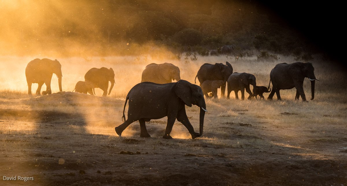 Photographic Safaris with David Rogers: Capture Hwange 11