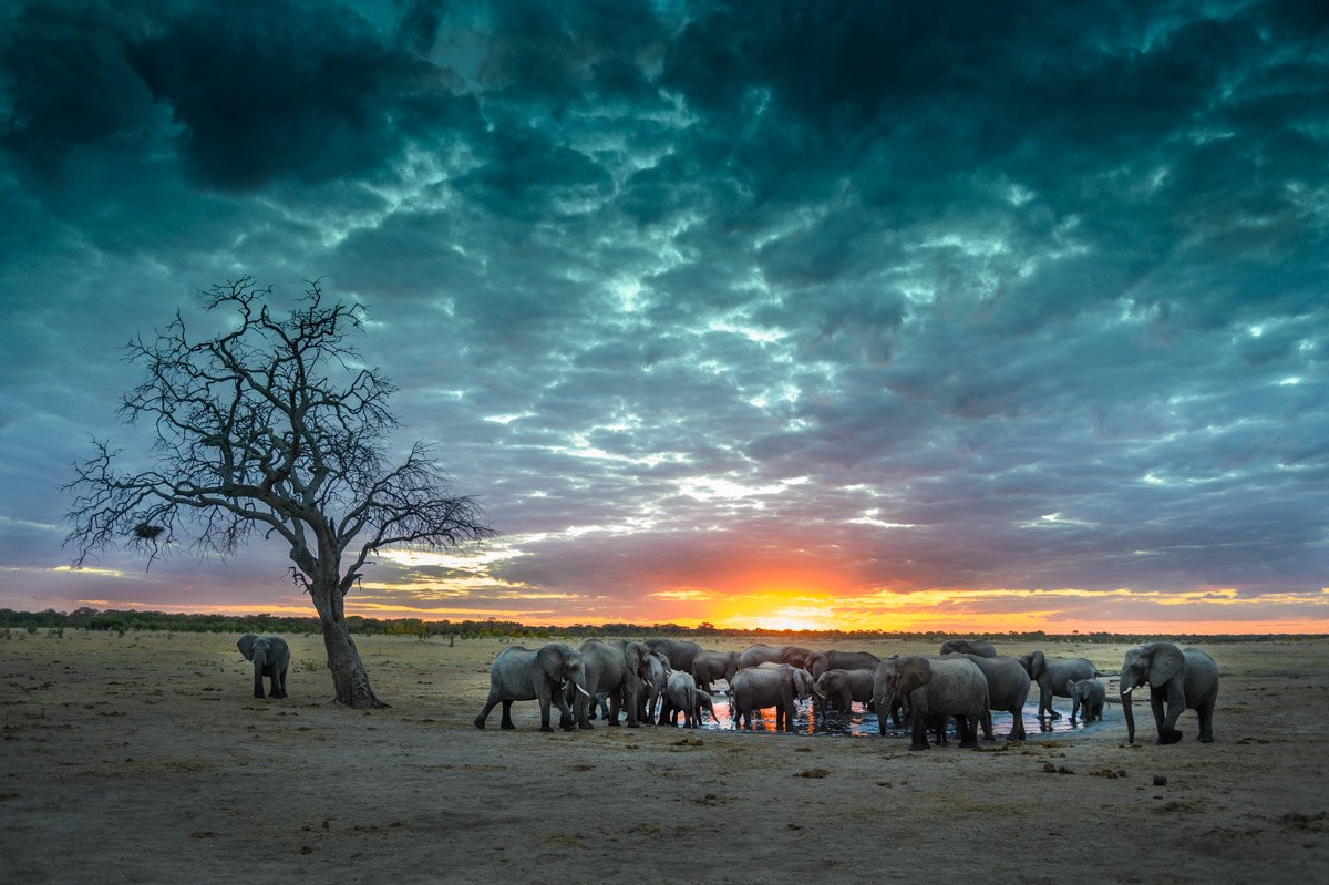 Photographic Safaris with David Rogers: Capture Hwange 9