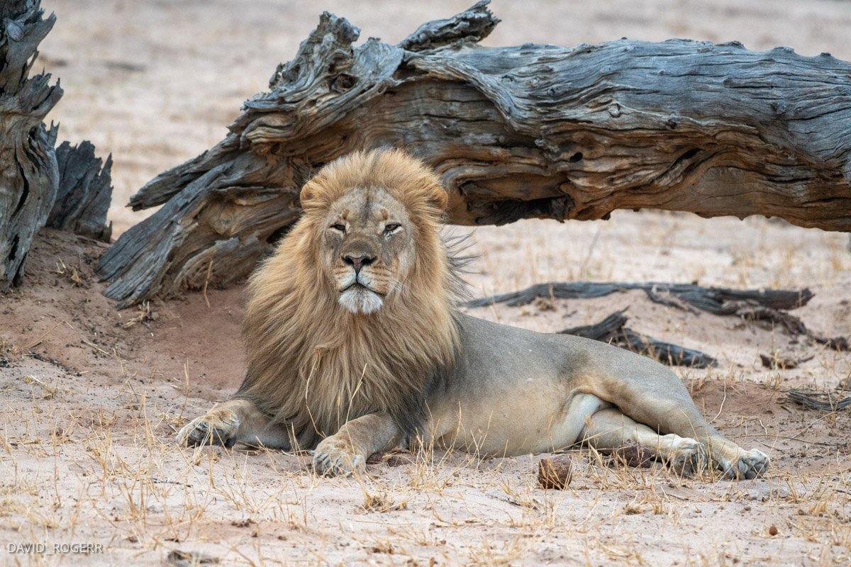 Photographic Safaris with David Rogers: Capture Hwange 12