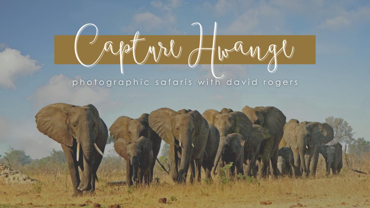 Capture Hwange Photographic Safaris