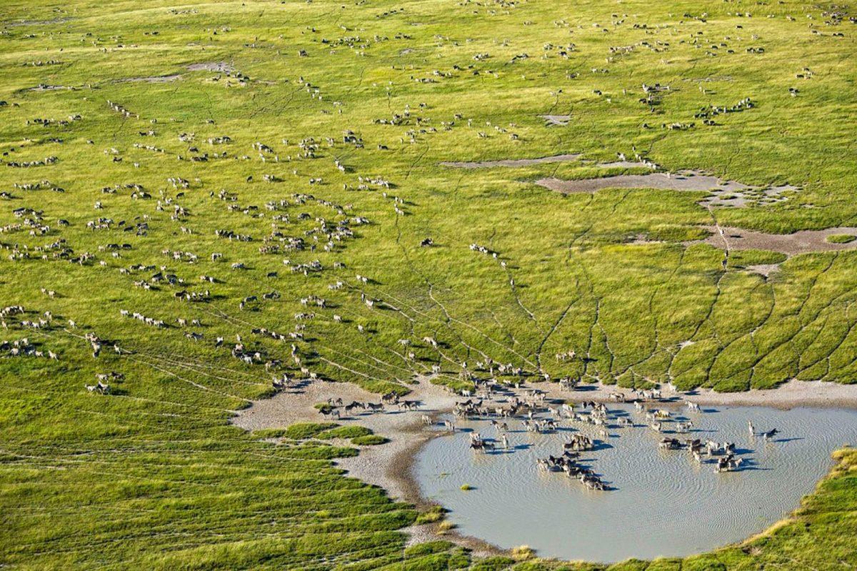 A Private Viewing of Wildest Botswana: Mogotlho Safari Lodge 14