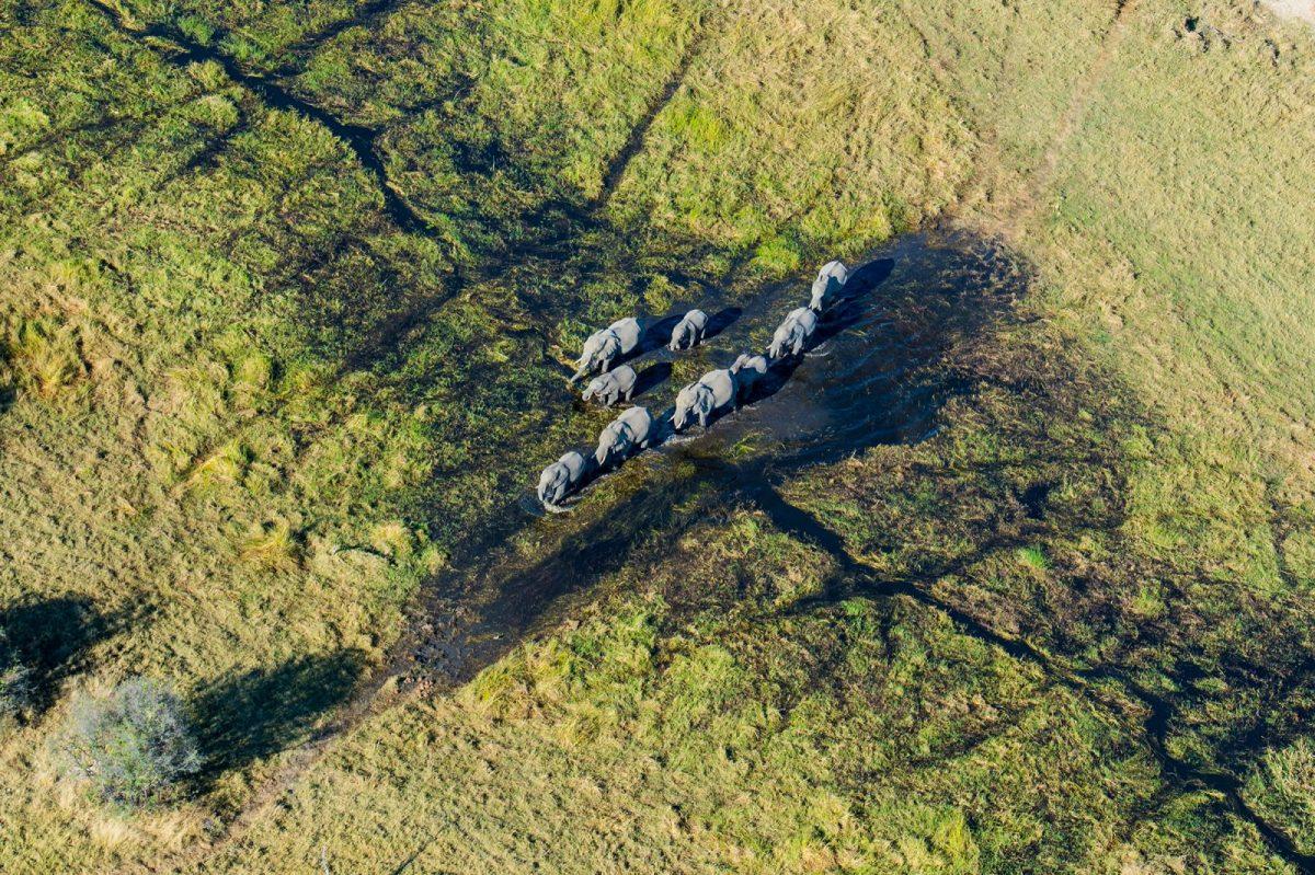 A Private Viewing of Wildest Botswana: Mogotlho Safari Lodge 13