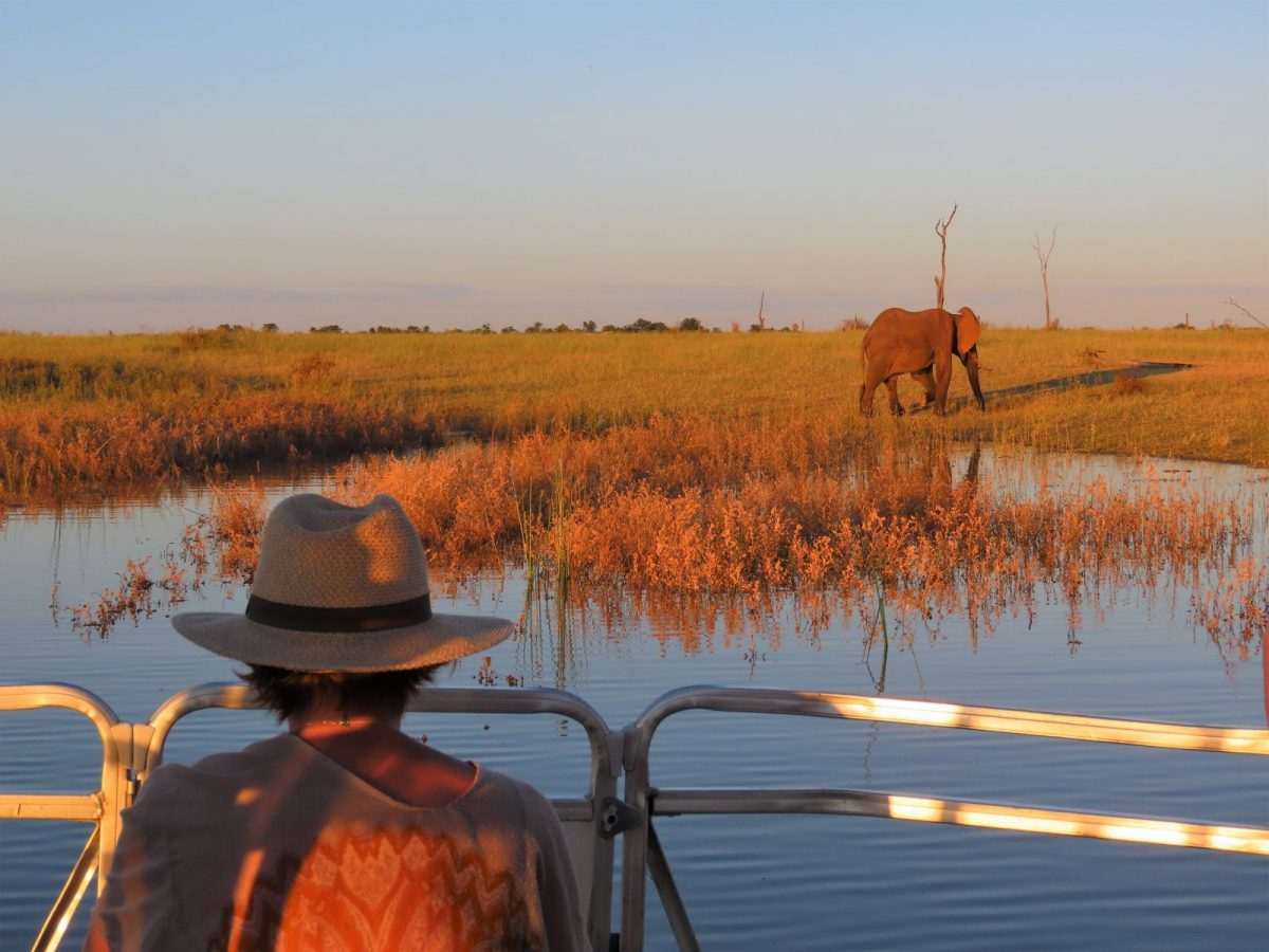 The Unique Charm of a Safari Upon Water 5