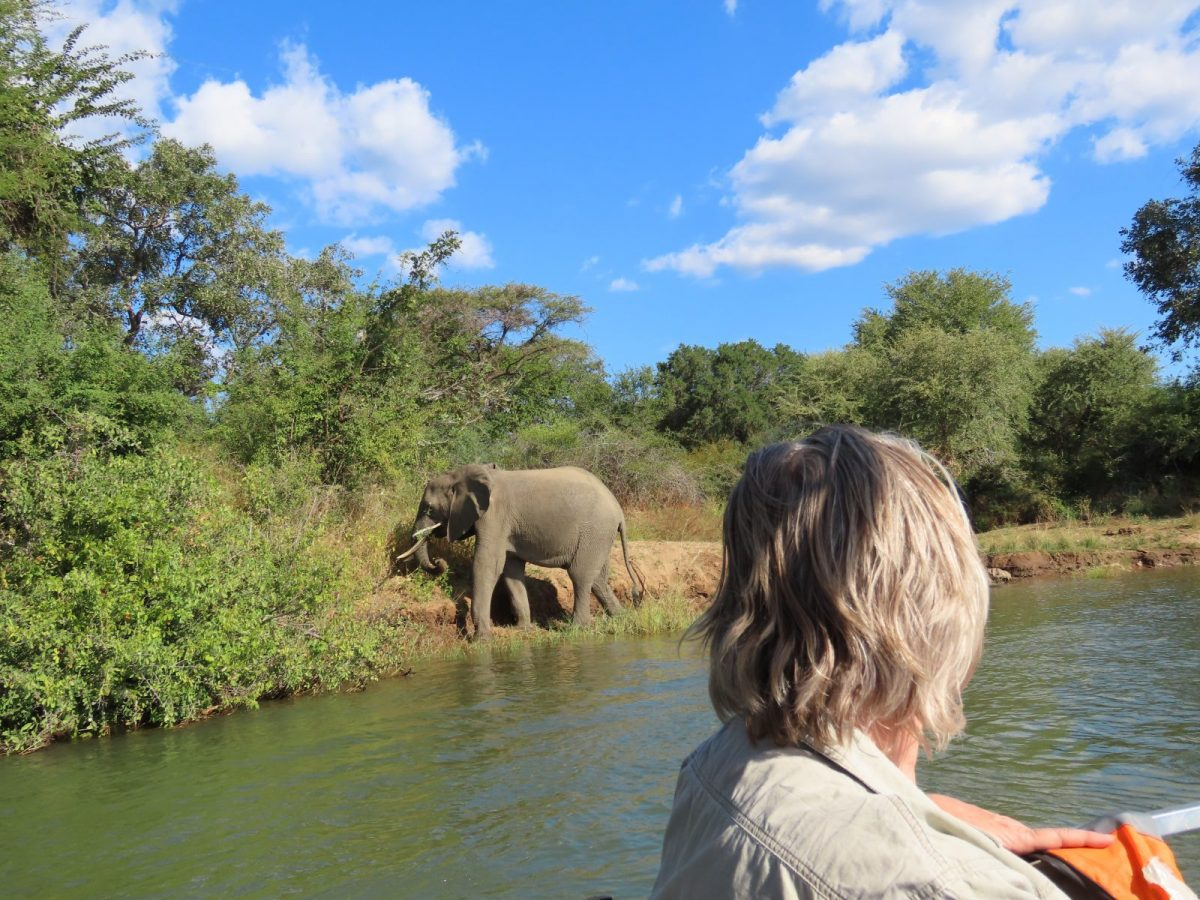 Mana Pools National Park: Where Dreams Come True 7