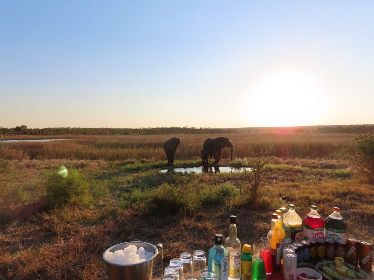 Gin and Tonic: Best Paired with Sunsets and Elephants in Hwange National Park 9