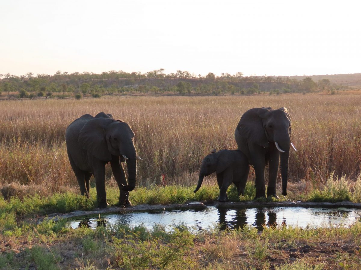 Gin and Tonic: Best Paired with Sunsets and Elephants in Hwange National Park 8