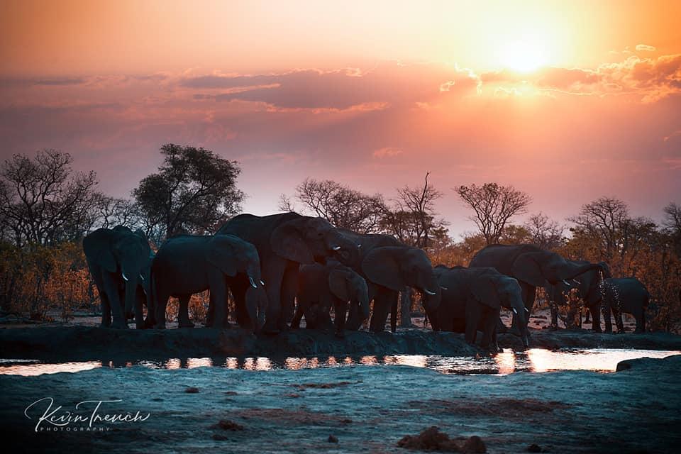 Camp Kuzuma: A Love Affair With Elephants 7