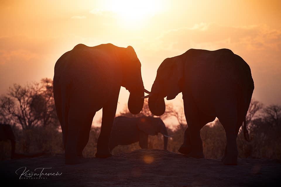 Camp Kuzuma: A Love Affair With Elephants 9