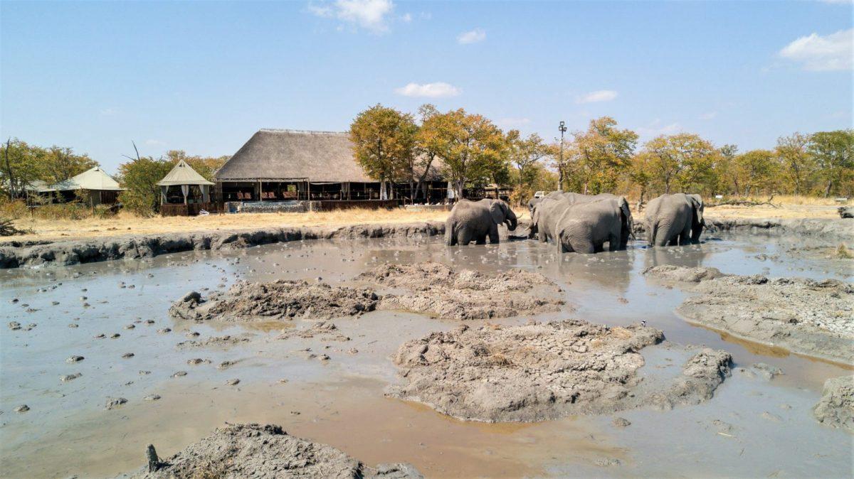 Camp Kuzuma: A Love Affair With Elephants 8
