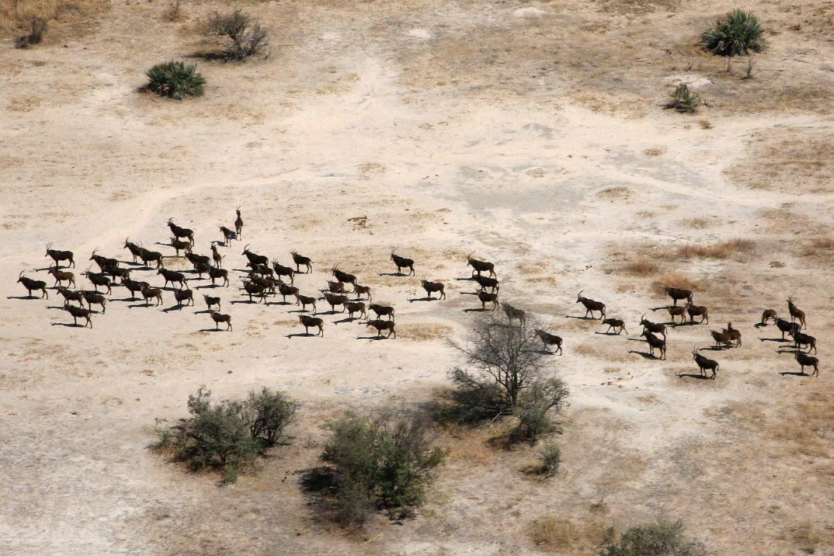 Beyond the Borders of Inspiration in Chobe, Botswana 8