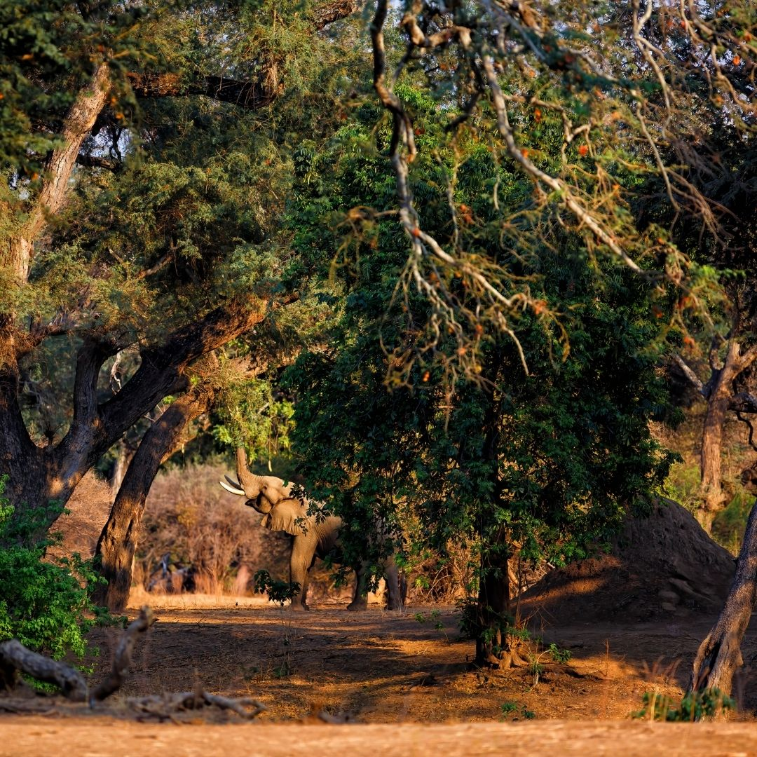 Walking in the Wild with a Spring in your Step: Mana Pools 9