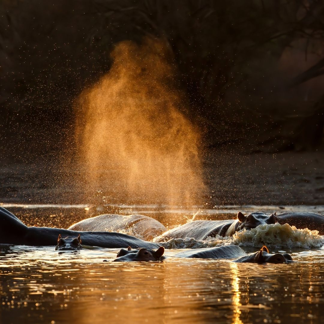 Four the Love of Water, Mana Pools 13