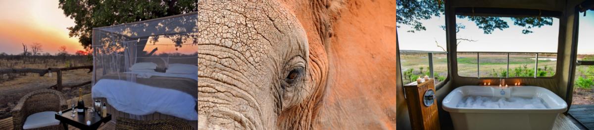 Elephant's Eye Hwange