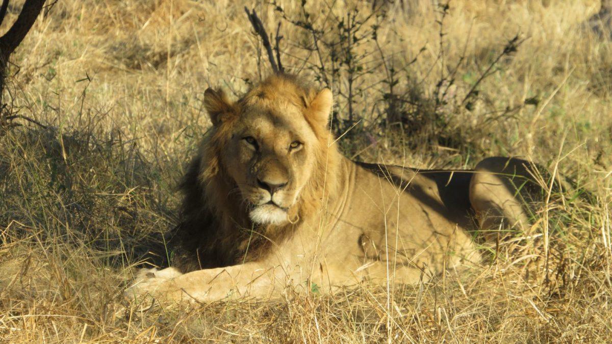 Exploring Moremi Game Reserve with Hideaways, Botswana 9