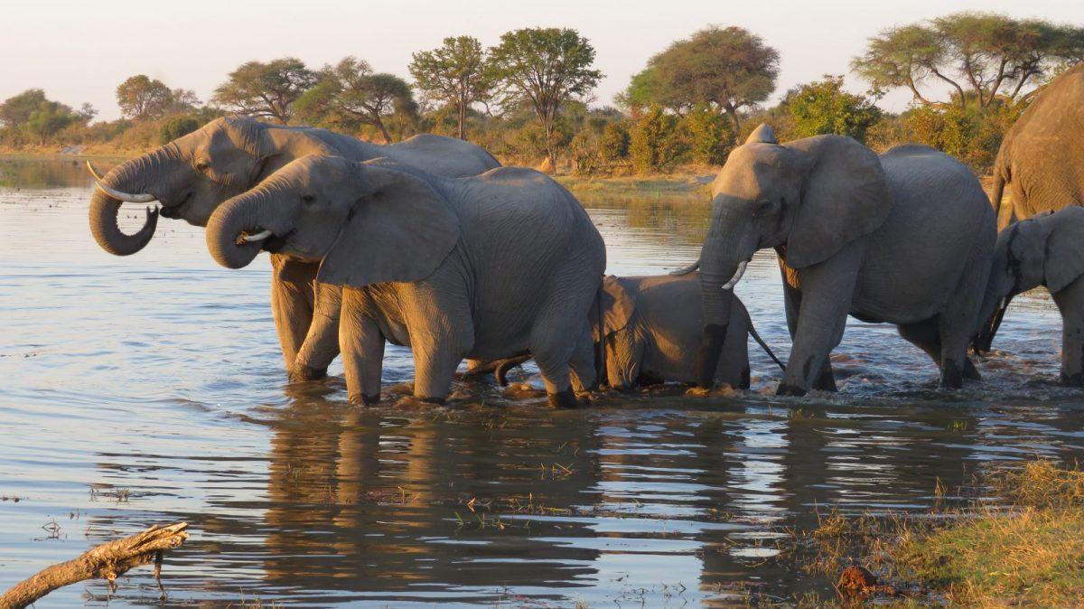 Exploring Moremi Game Reserve with Hideaways, Botswana 11